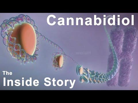 Trpv1 Cannabinoid Cbd