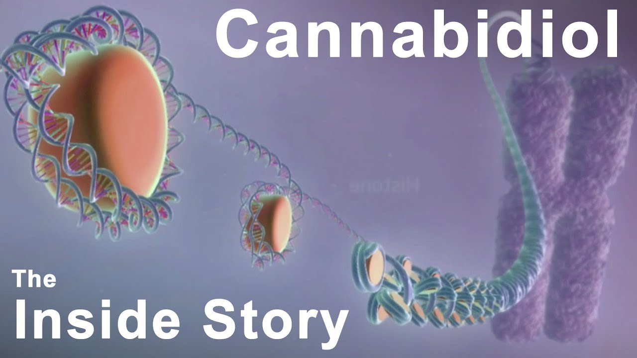 The Inside Story of Cannabidiol - What are the Benefits of CBD?