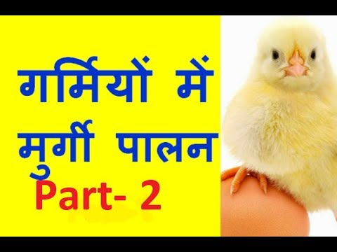 Poultry Management In Hot Summer Part-2 - पूरी दवा जानकारी . Poultry India TV