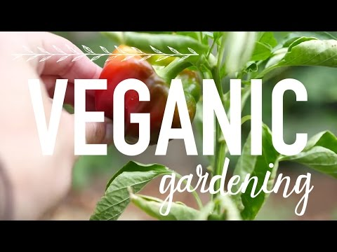 Growing Your Own Food | Veganic Gardening