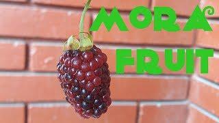 Mora Fruit Review - Weird Fruit Explorer Ep. 216