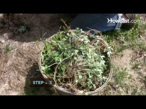 How to Practice Organic Farming