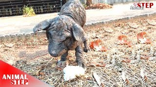 Poor Homeless Dog Eats Only Food on Trash for Everyday's Life