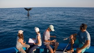 Projeto Baleia Jubarte e Petrobras: juntos pelas baleias