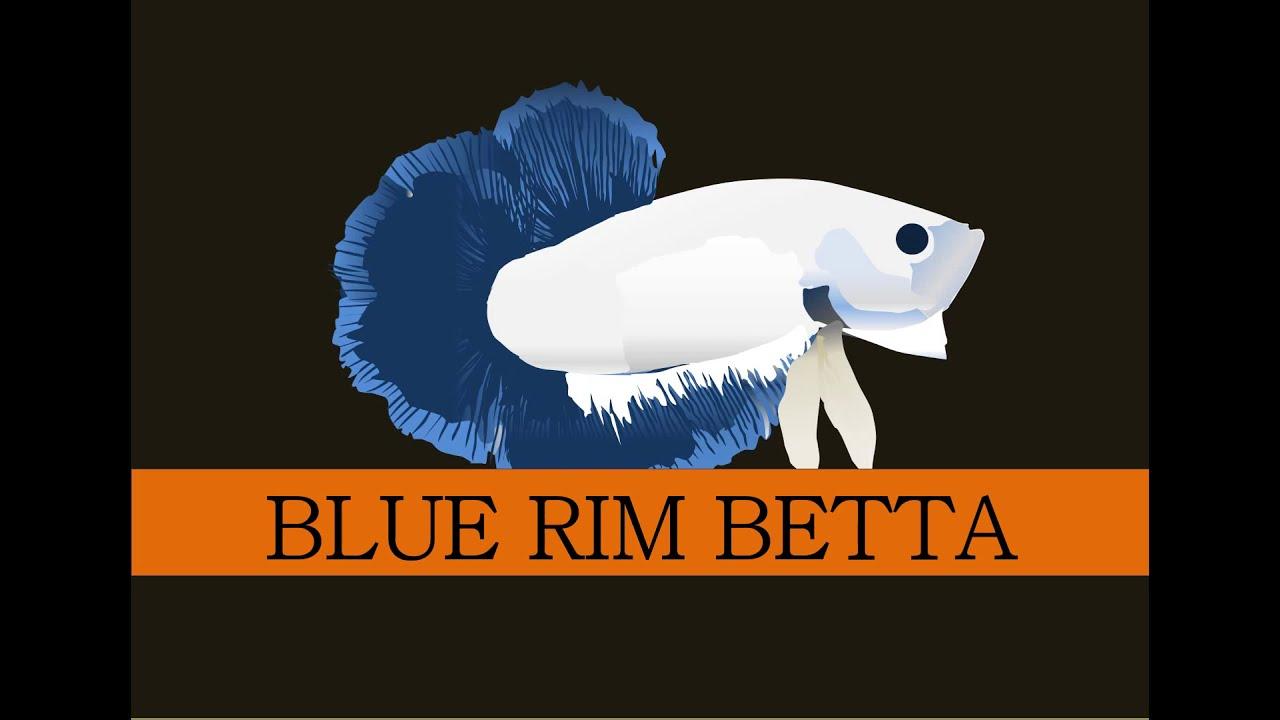 Ikan Cupang Red Rim Hobi Mancing Dan Makan Ikan