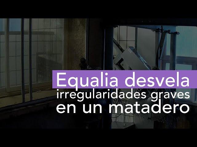 Equalia desvela irregularidades graves en un matadero de España