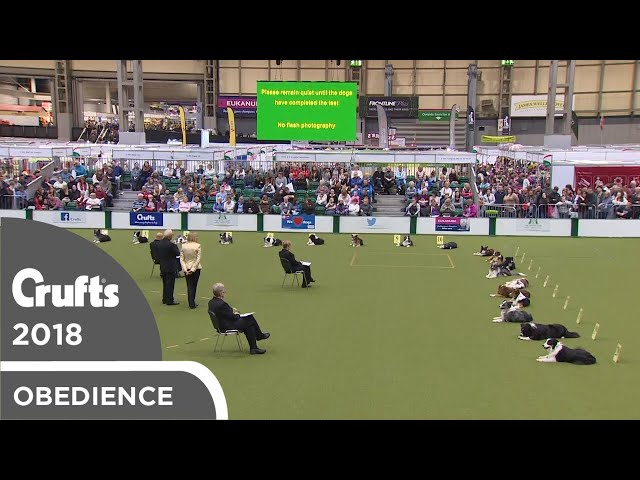 Obedience - Dog Championship Stays | Crufts 2018