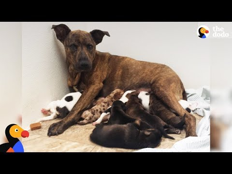Growling Stray Dog Protecting Her Puppies Slowly Trusts Rescuers | The Dodo