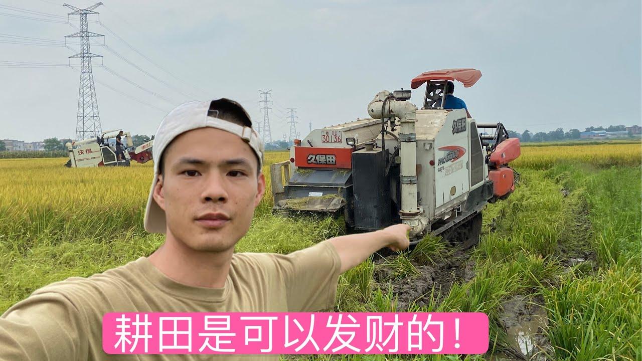 今年水稻大丰收了,全部机械化耕种,耕田比以前轻松了