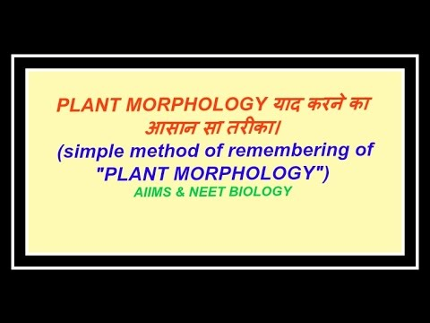 Plant Morphology for NEET and AIIMS (Fruit-1)