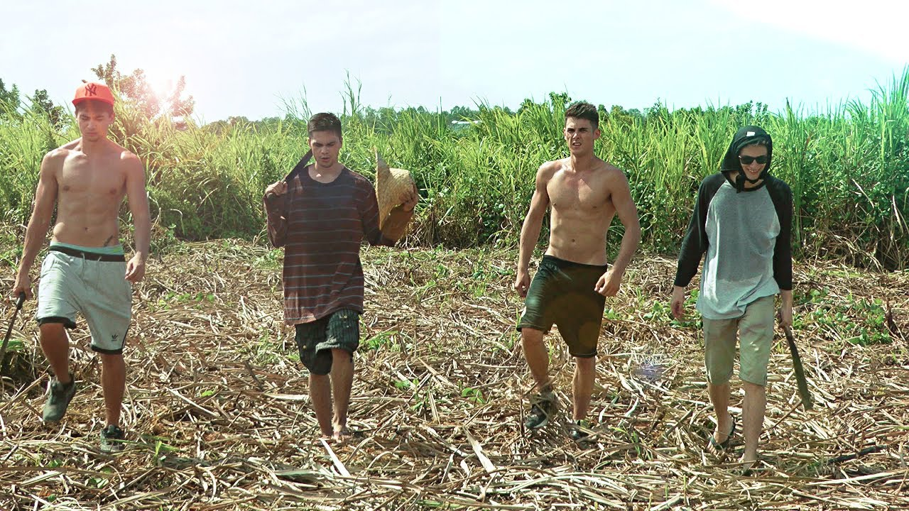 Watch How to Harvest Sugar Cane video