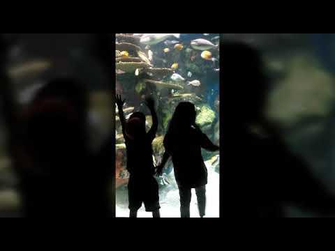 Ripley ' s Aquarium, more Broadway at the beach, ocean and resort fun