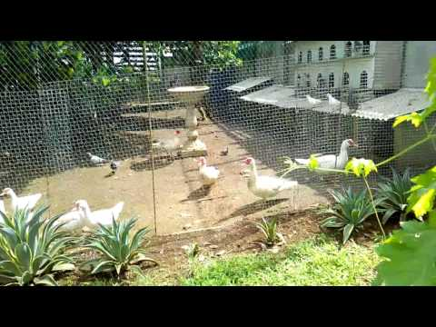 Organic Farming in the Philippines Learn Vermiculture first..  09082919980