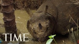 Watch Rare Footage Of The World's Most Endangered Rhino | TIME