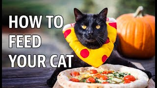 Feed your Cat before it Eats you