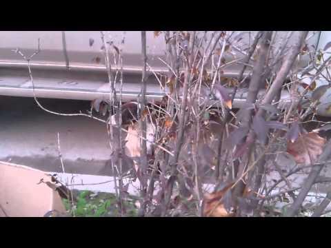 Видео никиты(3)
