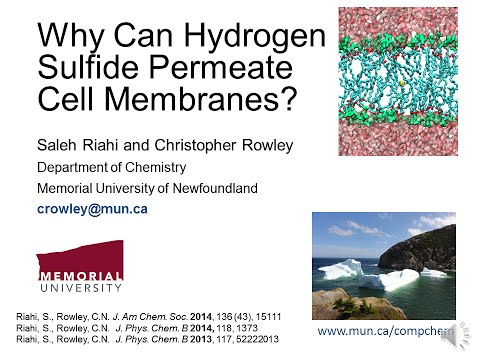 Why Can Hydrogen Sulfide Permeate Cell Membranes?