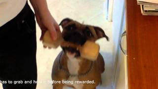 Dog Training Tutorial: Teach Your Dog To Fetch Using The Clicker Method (part 2)