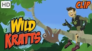 Wild Kratts: Slow Sloths thumbnail