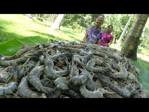 Prawns Recipe ❤ Prawns / Shrimp Stew Prepared In My Village By Grandma | Village Life