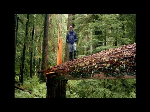 Paul Stamets - Solutions from the Underground | Bioneers