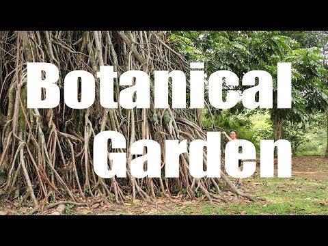 Bogor Botanical Garden, Indonsie