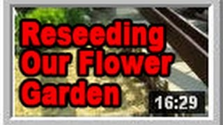 Reseeding Our Flower Bed - Wisconsin Garden Video Blog 523