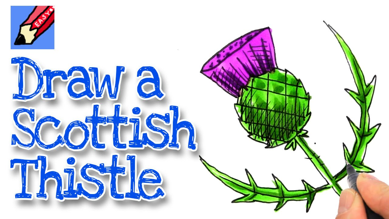 How To Draw A Scottish Thistle Real Easy