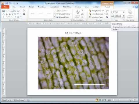 Adding a scale bar onto a microscopy image using PowerPoint