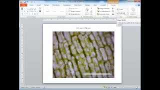 Adding Scale Bar Microscopy Image Using Powerpoint