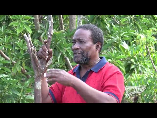 Suriname Overzee   'Suriname Leeft' afl. 10   Bezoek aan het District Marowijne (Moengo)