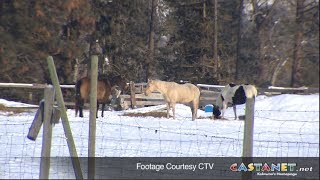 BCSPCA seizes horses from a farm in Grand Forks