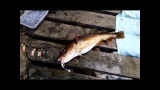 Рыбалка в Норвегии с берега на Фрафьерде(Видео о том как два друга ездили в Норвегии на Фрафьерд и ловили там рыбу., 2014-12-26T20:22:12.000Z)