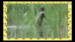 Неубиваемая Насадка.Рыбалка На Эффективную Наживку. [Ловля Рыбы На Сало Видео](Где взять средства на крутую рыбалку? ОТВЕТ ЗДЕСЬ!!! ЖМИ - http://binaryreview.blogspot.com/ Chinese Sleeper (Organism Classification) эфекти..., 2015-02-06T12:18:17.000Z)