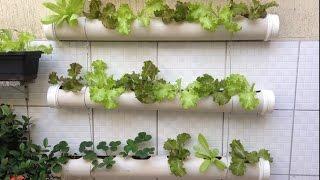 Vertical Lettuce Growing