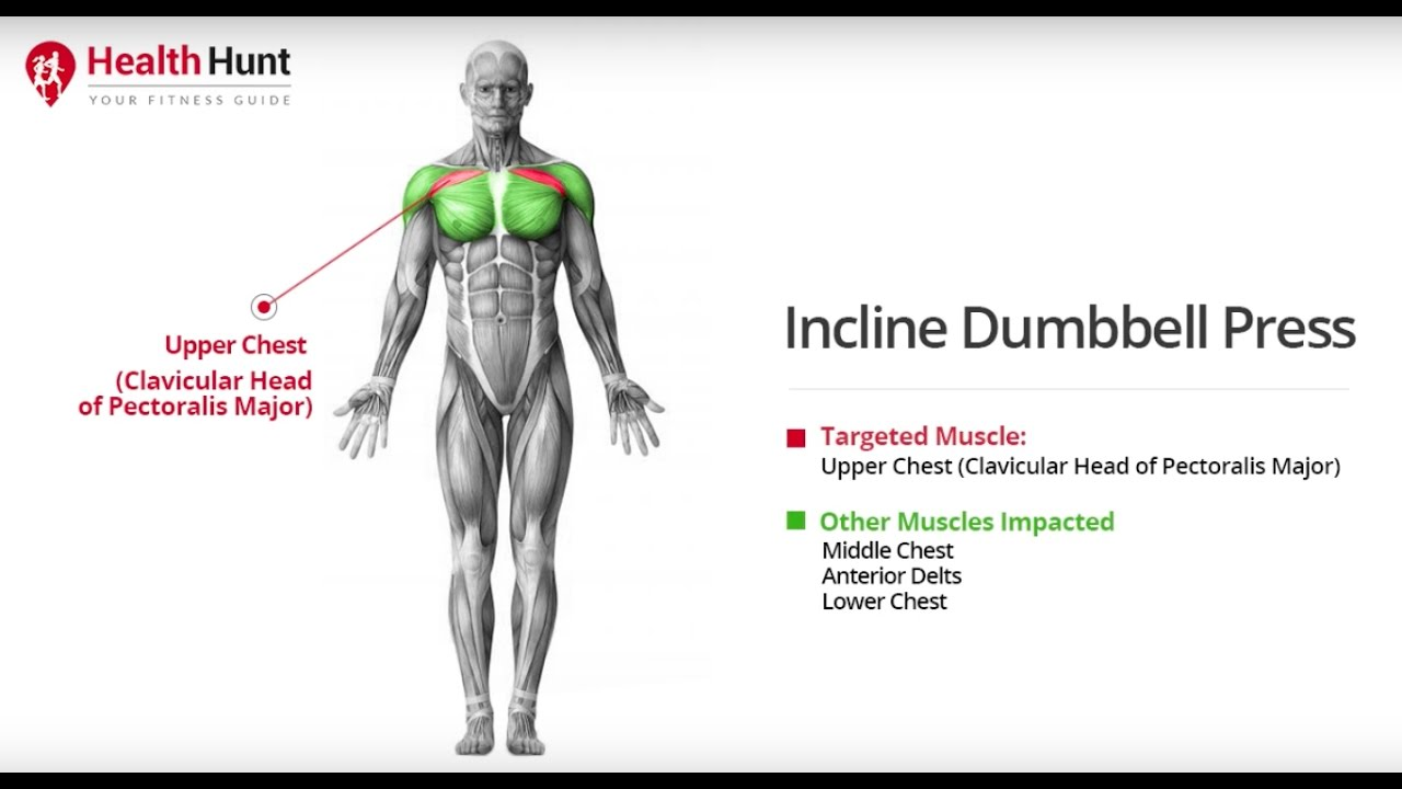 Inclined Dumbbell Press