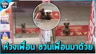 สาวเห็น สุนัขตัวน้อยมานั่งมองอยู่หน้าร้าน สงสารเลยนำอาหารมาให้ วันถัดมาชวนเพื่อนมาด้วย