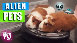 Pets Who Could Be Aliens  🤔👽🛸 | Try Not to Laugh Challenge