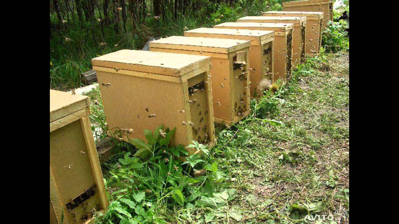 Ящики для пчелопакетов - YouTube