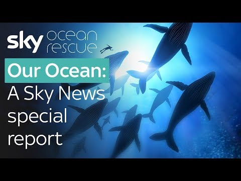 Special Report: Our Ocean