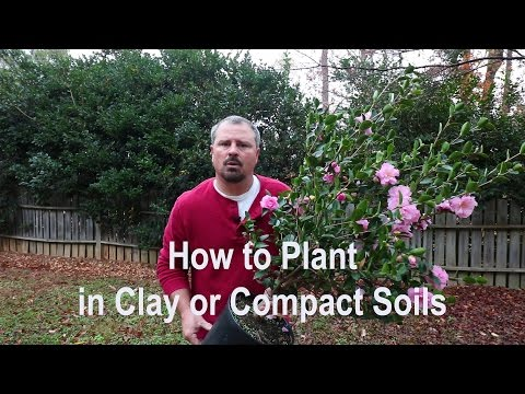 How to plant in clay, poorly draining, and compact soils. Proper tools, amendments, and techniques.