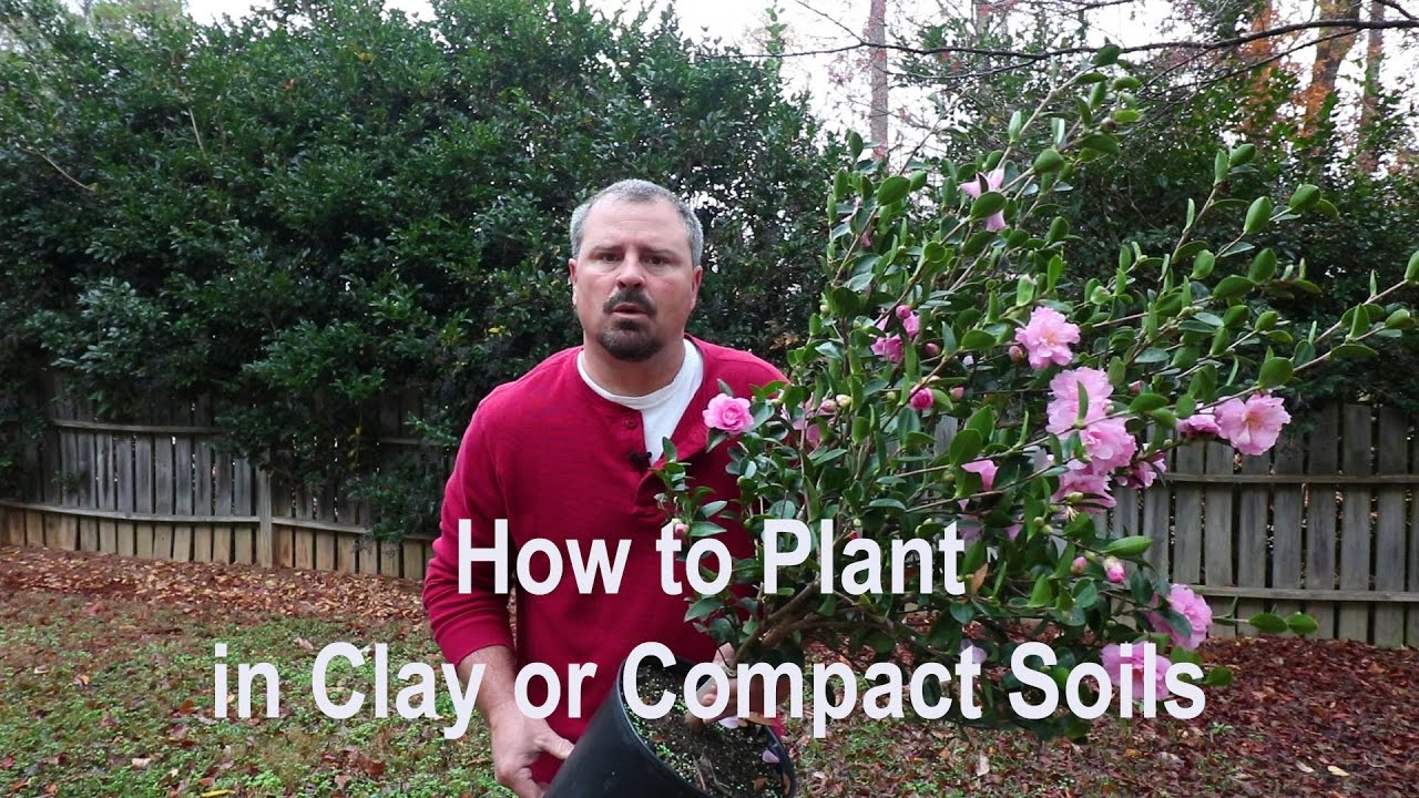 How To Plant In Clay Poorly Draining And Compact Soils Proper
