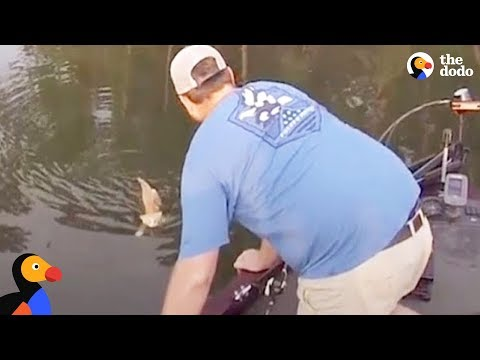 Kittens Swim Up To Fisherman's Boat Looking for Help | The Dodo