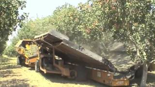 Pistachio harvesting