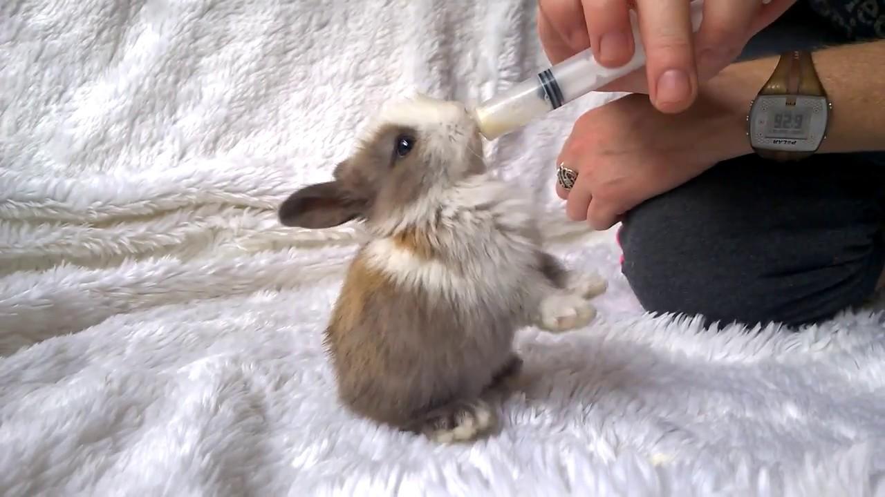 Baby Bunnies Love Milk Youtube