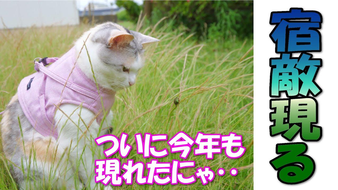 今年初!夏の宿敵を発見した三毛猫ネコ吉