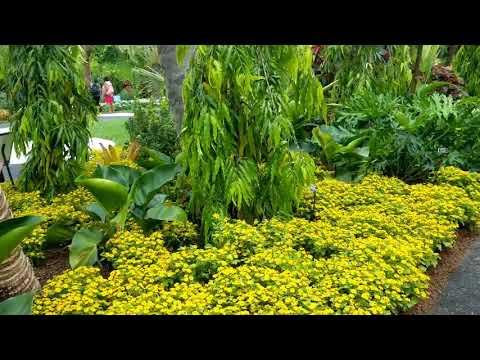 Brazilian modern Botanical Garden 2019 (Roberto Burle Marx)