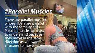 PARALLEL VS PENNATE MUSCLES (Ursulla Fernandes Brazilian Awesome Workout)