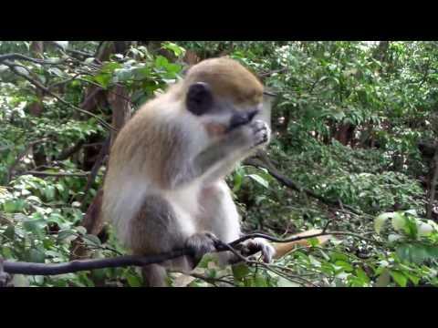 Wildlife Reserve Barbados