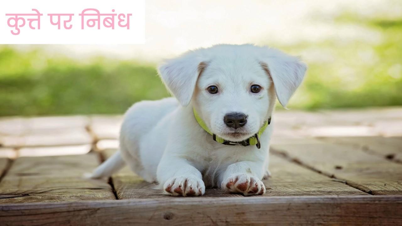 Essay on my dog in hindi